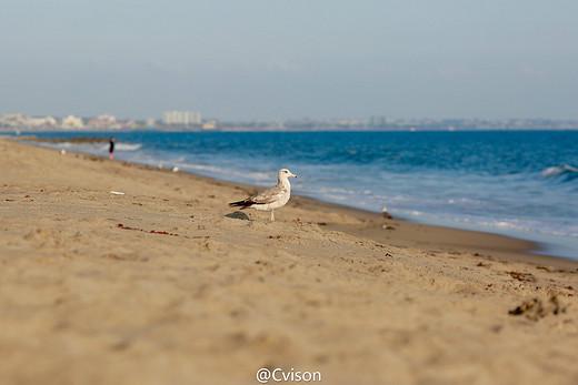 [美国] 圣莫尼卡的情怀-圣莫尼卡海滩