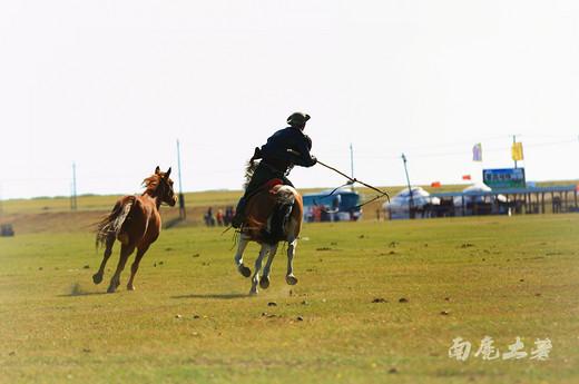 【呼伦贝尔】套马的汉子威武雄壮-呼伦贝尔大草原,根河湿地,内蒙古