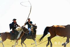 【呼伦贝尔】套马的汉子威武雄壮