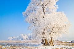 ABOUT WHITE-雾凇岛·北大湖·哈尔滨·冬游记