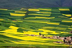 青海湖大環線上的絲綢遺韻