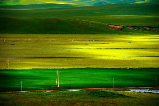 一路向北~七月的呼伦贝尔大草原-恩和俄罗斯民族村,白桦林,额尔古纳,额尔古纳河
