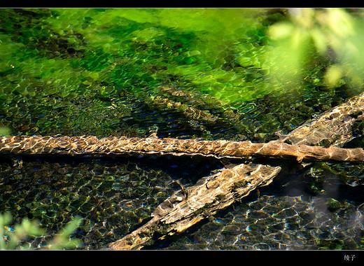 醉美九寨沟,惊艳花湖-五彩池,熊猫海,五花海,诺日朗瀑布,阿坝