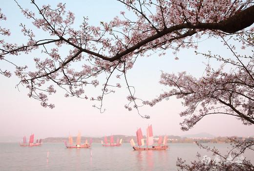 鼋头渚最强赏樱秘笈,Mark 了明年用-太湖,无锡