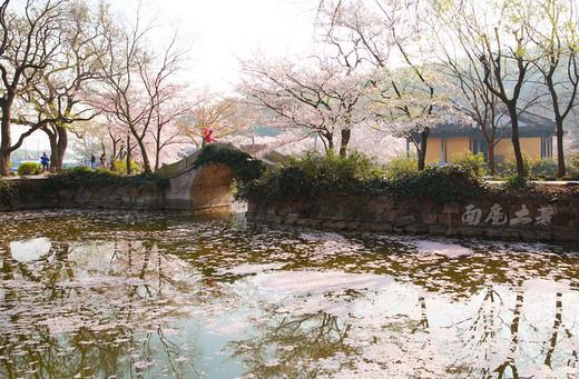 樱花见多了,更美的樱花湖您见过吗-鼋头渚,无锡