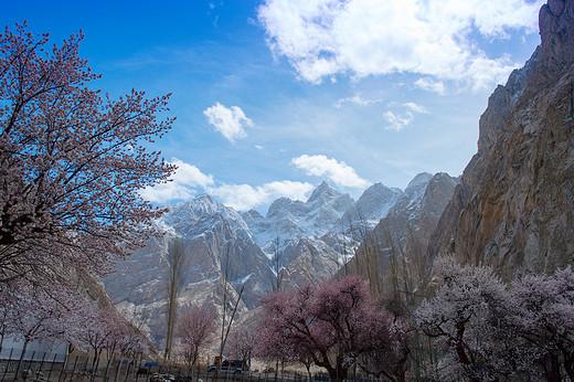 新疆南疆其如克同村杏花-帕米尔高原