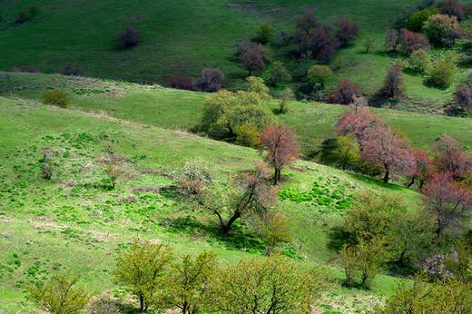新疆大西沟景区~附新疆行程-霍城县,乌鲁木齐,赛里木湖,那拉提草原,巴音布鲁克草原