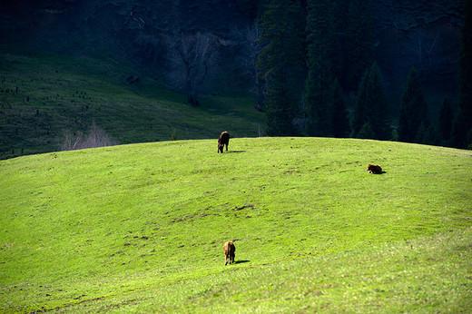 新疆那拉提草原景区