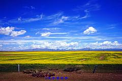 七月青海,风景在路上(一)
