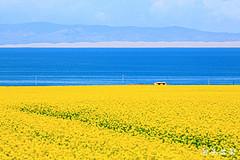 盛夏青海湖,看湖看花看日出