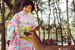 日本之秋的紅葉之旅