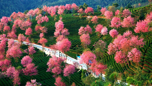 无量山,中国最早的春天-大理