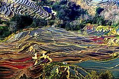 元阳梯田——哈尼族的七彩家园