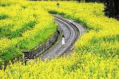 开往春天的列车|嘉阳小火车最全攻略