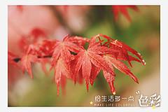 http://qyimg.iqingyi.com/inpost/20170406/q9qsmb3wxtazfi6r4p4icyd8xr3o5e1f.jpg!postcover