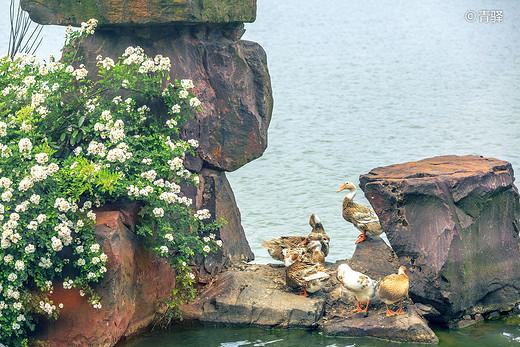 穹窿山下探花界,精致的闺蜜时光