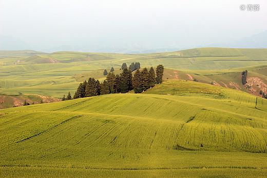 新疆两万里(201907)-天山,伊犁,巴音布鲁克草原,独库公路,塔克拉玛干沙漠