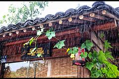 在杭州,慢节奏行走