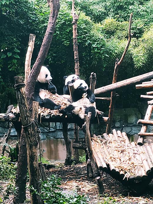 相伴人生路 金秋西北行 ——自驾28天侣行记 城市风情篇之成都-昭通,大熊猫繁育研究基地