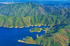 秋末猎艳,皖南的水上红杉林