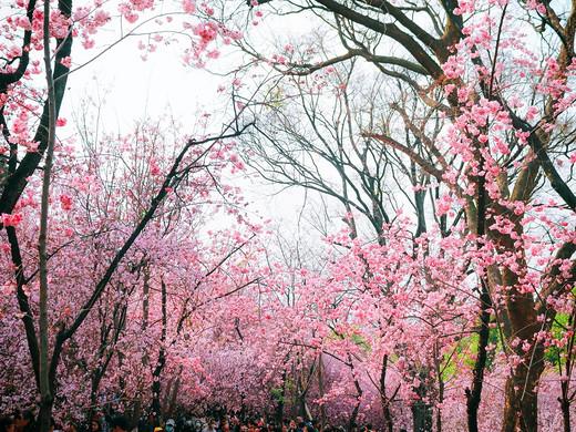四季看花花不老,一江春月是昆明-云南