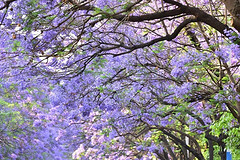 四季看花花不老,一江春月是昆明