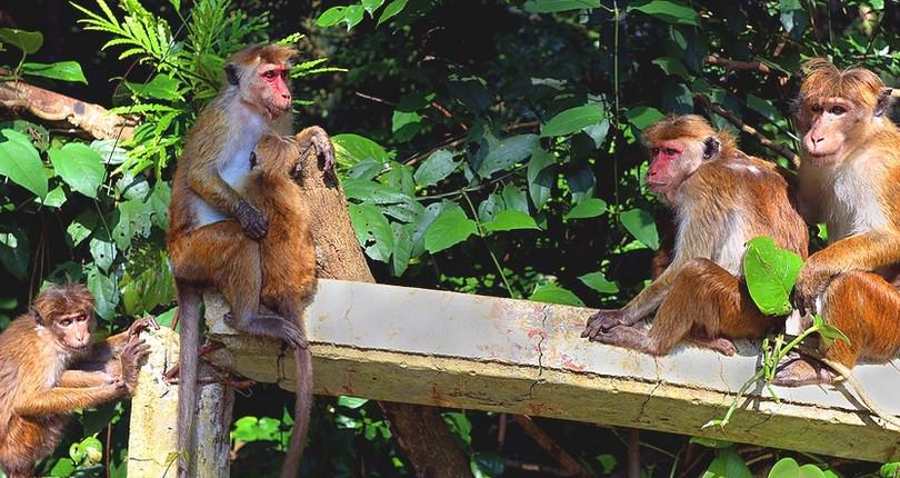 乌达瓦塔凯勒保护区
