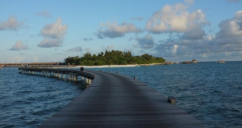 可可棕榈波杜希蒂岛