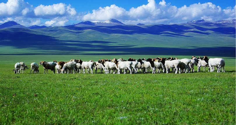 巴音布鲁克草原