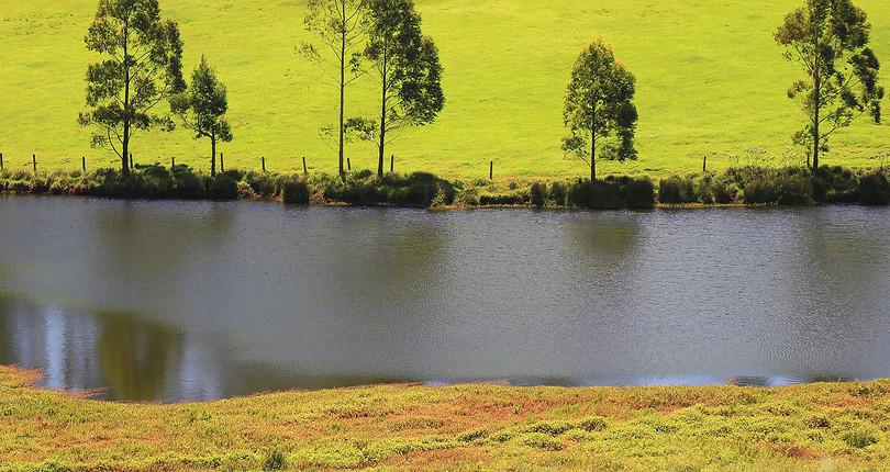 新西兰农场