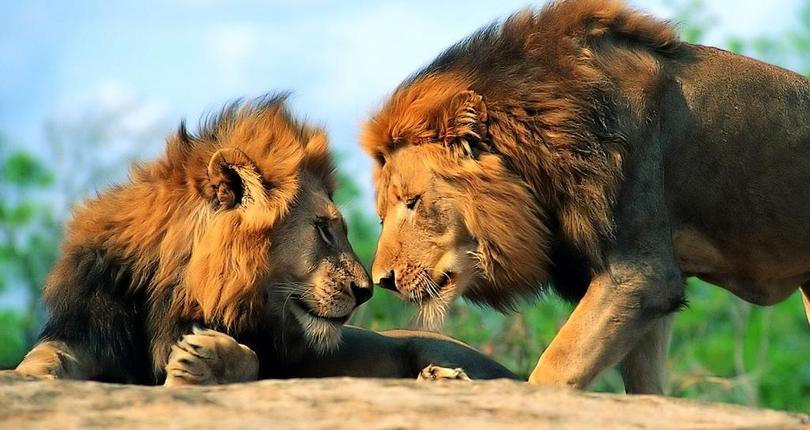 狮子园-约翰内斯堡