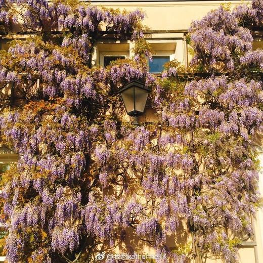 #travel diary day 17-米拉贝尔宫,日本