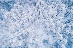 浴雪阿尔山,不顾山高与路远(1)