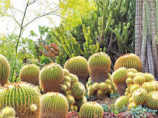 洛杉矶的私人花园,爱丽丝漫游奇境记