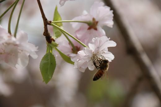 锡城之春-无锡