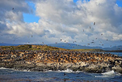 【南美阿根廷记】这个寒冬,我在地球另一端过夏天 ! (五)-企鹅岛-阿根廷,乌斯怀亚