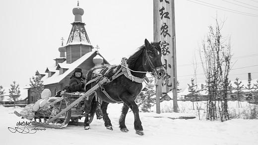 在最冷的天气去东北的最北(中)哈尔滨-漠河-雪乡-松花江,白桦林,北红村,北极村,大兴安岭