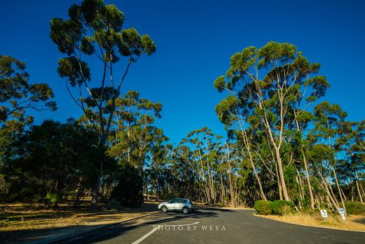 迷情考拉,追寻袋鼠,从阿德莱德到墨尔本漫漫自驾路(3)-袋鼠岛,澳大利亚