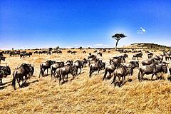 此生,一定要去非洲做一次探索者(肯尼亚+坦桑尼亚12天11晚)(2)