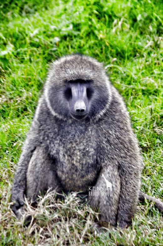 此生,一定要去非洲做一次探索者(肯尼亚+坦桑尼亚12天11晚)(1)-赛伦盖蒂平原,纳库鲁湖国家公园,乞力马扎罗山,安波塞利国家公园,马赛马拉国家公园