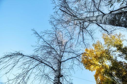 我在大兴安岭看秋叶,你要不要穿着羽绒服来与我喝酒-黑龙江