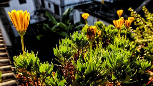 |四度与云南结缘- 2018年9月15日至28日 大理、丽江、泸沽湖、昆明14天自由行(上篇)-束河,蓝月谷,玉龙雪山,双廊,喜洲