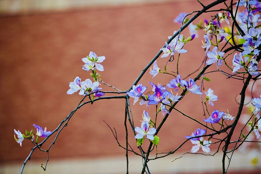 原来动人的春天都被藏在这里-天津大学,浙大之江校区,厦门大学,云南大学,中山大学