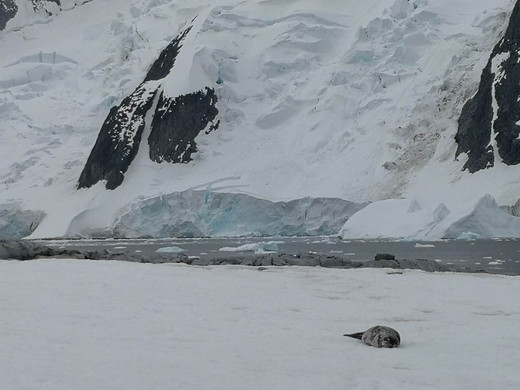 逐梦南极 感受最纯粹的美好(二)-利马水道,库佛维尔岛,德雷克海峡,南极洲