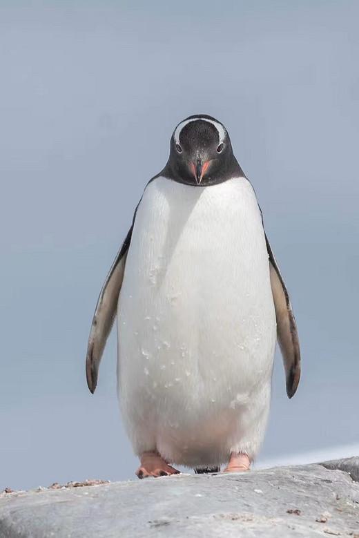 逐梦南极,感受最纯粹的美好(四)-德雷克海峡,南极洲