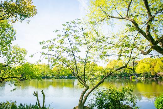 最美西湖四月天,杭州唯一的绿樱花都开好了