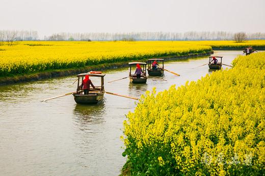 壮观,航拍全国最大的水上油菜花海-兴化,江苏