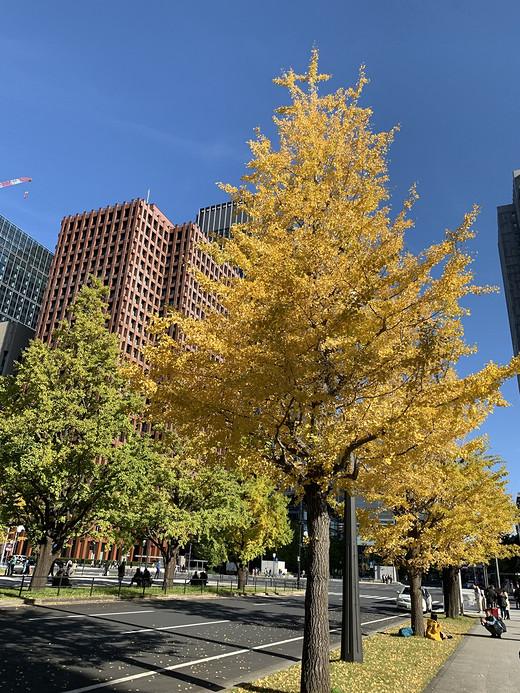 今秋·漫步关东圈-国会议事堂,东京